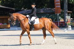 IMG_7063 (dreiwn) Tags: dressage dressur dressuur pferd reitturnier turnierreiten pferdesport horse horseback horseriding equestrian reitverein dressurprüfung kandare doublebridle reiten pferde reitplatz ridingarena
