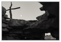 Tres en ratlla (enric riba segura) Tags: montserrat bosccremat bosc de les creus