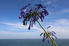 Eternity (radosveta_vassileva) Tags: flower purple sky horizon radosveta vassileva