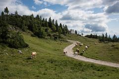 Velika Planina (Sandro Albanese) Tags: slovenia republikaslovenija slovenija europa europe natura nature verde green lago laghi lake lakes montagna mountain mountains velikaplanina