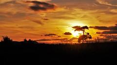 Golden sunset (Sundornvic) Tags: shropshire sunset sun shine clouds sky pentaxart skyscenes tree silhouette fields