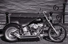 Harley Davidson (Jeanni) Tags: motorbike harley davidson fencefriday fence friday fencedfriday
