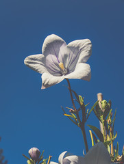 White & Blue (Asif A. Ali) Tags: powershot canon park g1x ottawa markii asifalicom asifaali gatineau quebec canada nature