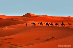 Camel Tours in the Sahara Desert. (Photographing_The_World) Tags: morocco marokk travel travelphotography arabic africa muslimcountry culture wanderlust explore people northafrica moroccan moroccanculture moroccancolors moroccancolours moroccanpeople africanpeople discovermorocco exploremorocco marrakesh marrakech fes fez agadir asilah essaouira merzouga sahara maroc chefchaouen colors travelphotos arabicculture arabicpeople travelblog muslimpeople muslimculture diversity multicultural locals locallife moroccanlifestyle moroccanlife saharadesert berber camel camelrides sanddunes dunes pattern sandtexture moroccantours cameltoursinthesaharadesert