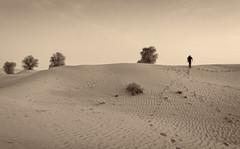 Dubai desert in b/w (Tiigra) Tags: dubai unitedarabemirates ae 2013 landscape nature plant tree
