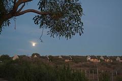 Addo Elephant NP - Mondaufgang (astroaxel) Tags: sdafrika easterncape addo elephant np mondaufgang restcamp
