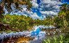 Myakka River (DonMiller_ToGo) Tags: hdr myakkariver hdrphotography nature onawalk outdoors reflection water d810 5xp florida
