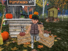 Who Wants one? 8) (Zaidon Resident) Tags: fawnkisses flite lazo gimmick besom posies jian tiptoes groupgift free new landscape secondlife toddleedoo nature ninetynine photo photographer photography photooftheday photograpy pictures people pc pose poses pretty sale blogger blogging babies animals virtural reality vibes fall autumn pumpkins