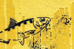 Australian Sunfish :-) (A Different Perspective) Tags: australia perth victoriapark westernaustralia blue detail drip eye fin fish layer mural paint spill texutre toilet wall yellow