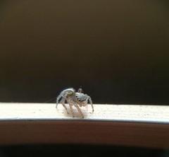 (DarkMistral) Tags: macro smartphone spider closeup nature animals animali ragno