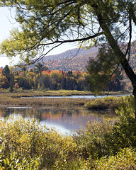 Berlin Pond (Vermont Lenses) Tags: vermont pond fall autumn foliage tress maple color landscape