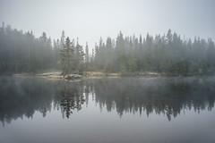 Cold morning mist (Helena Normark) Tags: fog mist fall autumn leirsjen storeleirsjen storleirsjen bymarka trondheim srtrndelag norway norge sonyalpha7 a7 voigtlnder voigtlanderultron21mmf18 cv2118