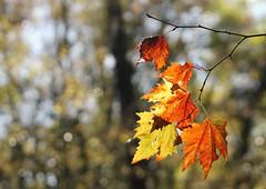 Potere della goccia riflettente! (SimonaPolp) Tags: fall foglie autunno foliage day giorno sun sunlight luce sole light canon bokeh nature natura leaves divertimento wood forest bosco tree plant