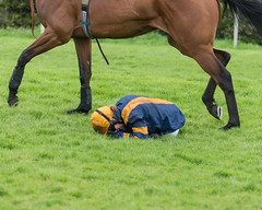 Lucy Gardner Takes a Heavy Fall (Steve Barowik) Tags: horse fence nikon yorkshire nh jockey chase a1 races jumps racecourse trainer saddle stables obstacles hurdle d600 wetherby 70200mmf28 nationalhunt ls26 stevebarowiksb