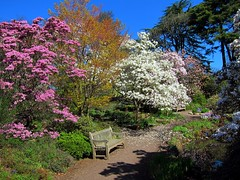 Bench with a view (Heaven`s Gate (John)) Tags: pink trees england white nature gardens bench landscape botanical spring birmingham view blossom magnolia 10faves johndalkin heavensgatejohn