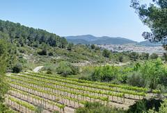 Town and country (Jonathan Palfrey) Tags: espaa digital landscape photo spain vines catalonia catalunya catalua photomatix santperederibes exposurefusion