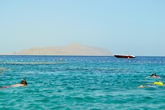 Red Sea (CiaraBoyle) Tags: sea summer sun holiday fish beach sunshine photography egypt sharmelsheikh el sheikh sharm