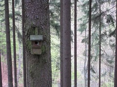 Birdhouse (Jeff Coons) Tags: travel forest canon germany deutschland is europe hiking hike powershot hills marburg wandern lahn wander sd940