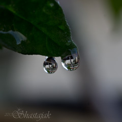The Drops (Shastajak) Tags: 50mm pentax refraction handheld waterdrops k5 sigma50mm128dgmacro pentaxk5