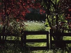 Margeriten-Tor_001 (bratispixl) Tags: germany licht oberbayern schatten garten farben gegenlicht chiemgau lichtwechsel traunreut margeritenwiese stadtrundweg bratispixl belichtungsproben
