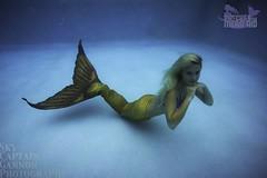 PatchestheMermaid (laurvonlacoste) Tags: blue orange woman shells water girl model modeling under blonde mermaid fins fluke h20