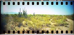 (K e v i n) Tags: arizona southwest film analog cacti 35mm lomography desert scan dirtroad sonorandesert sprockets saguaros marana santacatalinamountains sprocketholes southernarizona kodakcolorplus200 sprocketrocket epsonv500 lomographydigitaliza