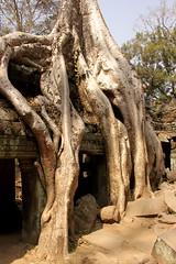 Angkor what?! Die Tempel von Angkor.