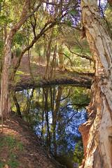 {Still waters}FCC126.jpg