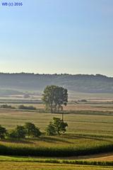 DSC_0001n wb (bwagnerfoto) Tags: regly morning landscape landschaft tjkp trees shadow summer hills dombsg tolna hgel outdoor