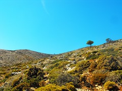 mountains of the south ~ Greece (M Lamprinos) Tags: greece kalymnos pserimos mountain fauna dry dodecanese island sky landscape bushes mountainscape tree nature outdoor hiking