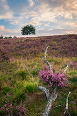 Death and Life (Maximilian Fellermann) Tags: sunrise morning clouds tree green purple heath heathland