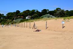 Sous le soleil (Cécile Pommeron) Tags: pornichet plage beach bronzer été summer