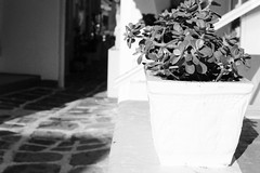 light all over (Katrinitsa) Tags: paros2016 paros greece greekislands island islands summer sunlight reflections white aegean canon monochrome flower plant shadows lights light road street sokaki sokakia paroikia pot nature cityscape village morning sunshine
