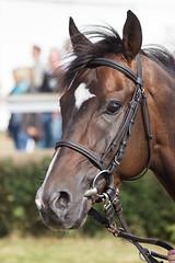 zur Abwechslung mal (feldweg) Tags: pferd horse galopp galopprennen ostseemeeting doberan 2016 baddoberan race racehorse horseracing cheval caballo cavallo hest kon galopper empirehurricane