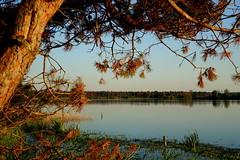 Avondlicht op Beuven Strabrechtse Heide/Evening light on Beuven Strabrechtse Heath (truus1949) Tags: fietstocht avondlicht natuur vennen strabrechtse heide heeze noord brabant