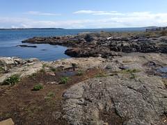 2016 09 19 Cattle Point_0026 (Blake Handley) Tags: blake blamar cattlepoint oakbay victoria bc britishcolumbia vancouverisland canada dogs ocean shoreline beardedcollie beardie