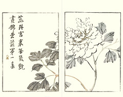 Common garden peony (Japanese Flower and Bird Art) Tags: flower common garden peony paeonia lactiflora paeoniaceae buncho tani nanga woodblock picture book japan japanese art readercollection