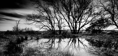 Still Waters (andy p m) Tags: lewes lewesdowns southdowns sussex blackandwhite dark foreboding landscape mono monochrome moody pond reflections reflectionsoftrees sombre