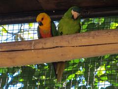 """Le Parc des Oiseaux d'Iguaçu: la grande volière aux perroquets <a style=""""margin-left:10px; font-size:0.8em;"""" href=""""http://www.flickr.com/photos/127723101@N04/29642990765/"""" target=""""_blank"""">@flickr</a>"""