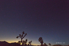 Joshua Tree at Night (Six Sigma Man (Thanks for the 2.1 Million views)) Tags: joshuatreenationalpark joshuatree california night