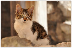 bon week-end  vous ! (AMCC, merci pour votre regard !) Tags: cat chat nikon