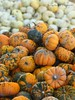 IMG_3555 (Sally Knox Sakshaug) Tags: pumpkin stem orange fall autumn october farm harvest squash outdoors nature sunshine bright white green small tiny accumulation stockpile collection stack display variety different varied round unique mound mass quantity gourd pile many batch lots loads heap field market