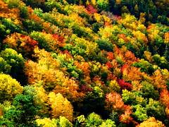 Close up of autumn splendour on The Cabot Trail, Cape Breton Island (peggyhr) Tags: peggyhr autumn red yellow orange green thecabottrail capebretonisland ns canada trees foliage