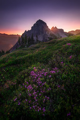 Rise (mattymeis) Tags: mount rainier northwest national park washington backpacking nikon matt meisenheimer travel flowers sunrise summer tatoosh pinnacle peak