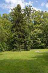 DUG_7344r (crobart) Tags: fallingwater frank lloyd wright kaufmann bear run nature reserve pennsylvania