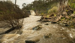 Campaspe River and Turpins Falls (damdiv) Tags: campaspe turpinsfalls water nd tree gumtree victoria nature waterfall longexpo nikon d800