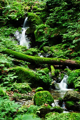 a little waterfall (picturesque-y) Tags: waterfall mitakesan mtmitake rock garden rockgarden green moss forest water nature little wild trees summer