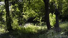 warriston cemetery (stusmith_uk) Tags: scotland landscape edinburgh warristoncemetery graveyard june 2016