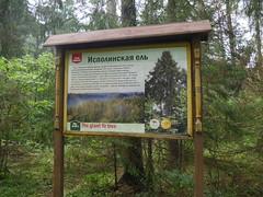 BelovezhskayaPuschaNP030 (tjabeljan) Tags: belovezhskaya pushcha national park belarus oerbos witrusland primarforest np nationalpark primarywood tsar