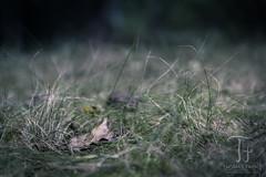 Light Meadow (Thomas TRENZ) Tags: austria autumn herbst nikkor nikon tamron thomastrenz vienna wiese d600 fx meadow natur nature wien sterreich